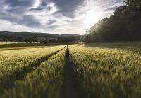 Znaczenie środków ochrony roślin dla odpowiedniej ilości zbiorów